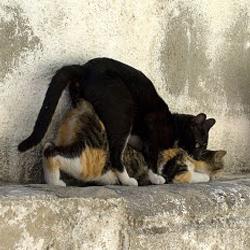 """Résultat de recherche d'images pour """"saillie chats"""""""